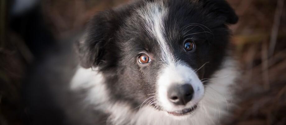 Ein Hund schaut direkt in die Kamera.