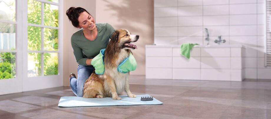 Ein Hund wird mit einer Shamponierbürste eingeschäumt.
