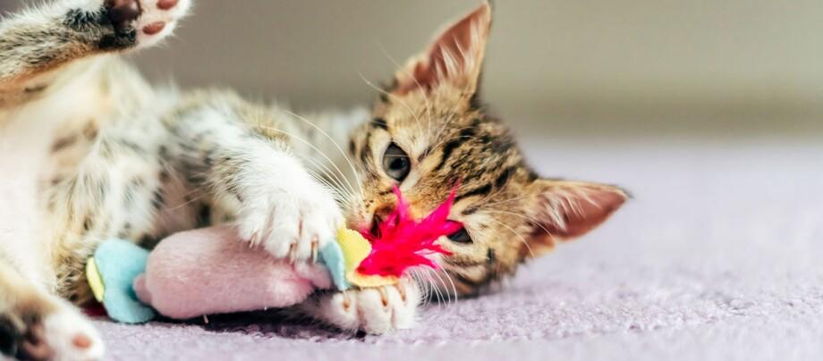 Ein Kitten spielt mit einem Spielzeug.