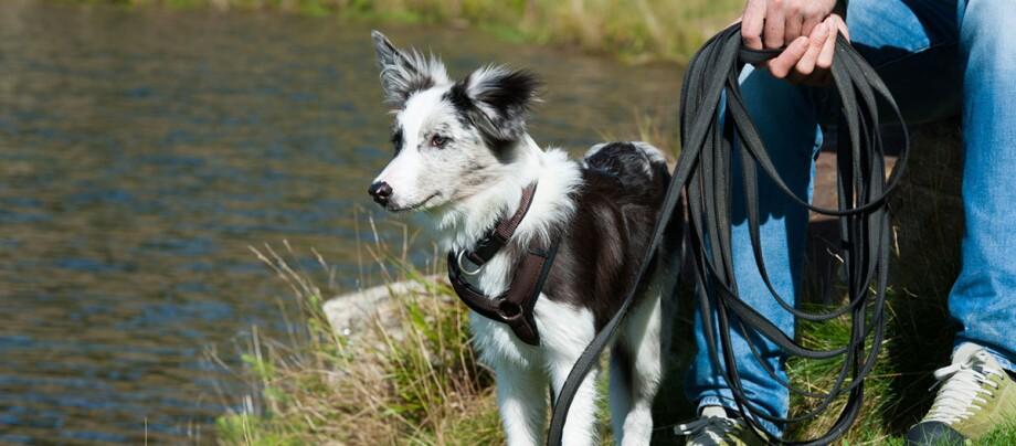 Hund an Schleppleine, Angeleinter Hund am See