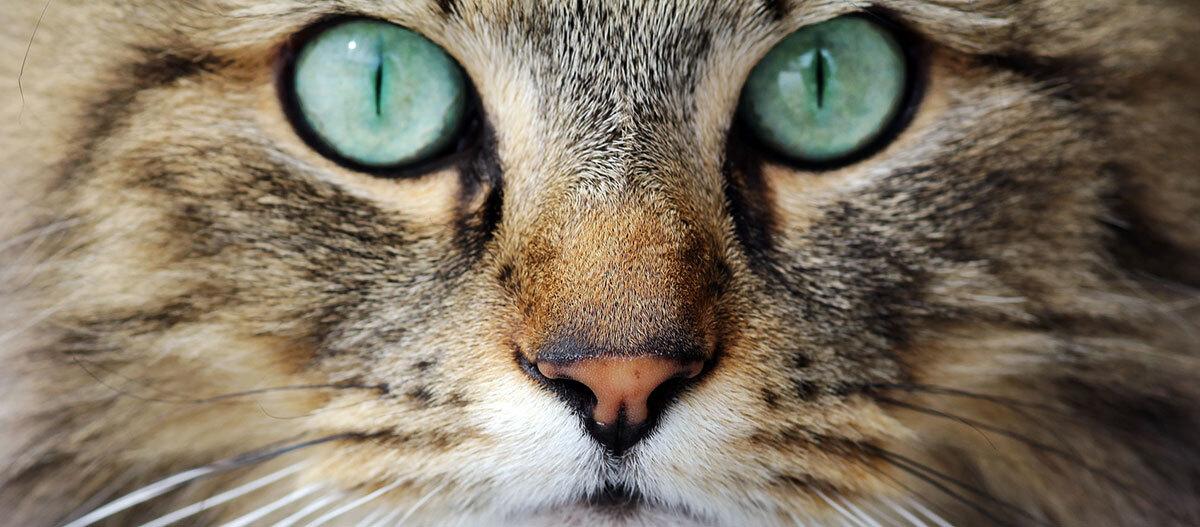 Nahaufnahme einer Katze.