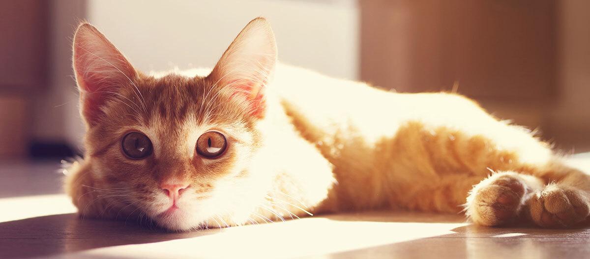 Eine Katze schaut direkt in die Kamera.