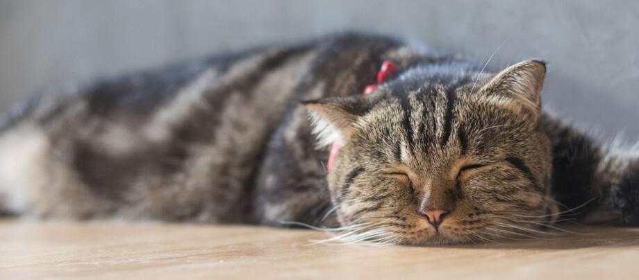 Eine Katze schläft auf dem Boden.