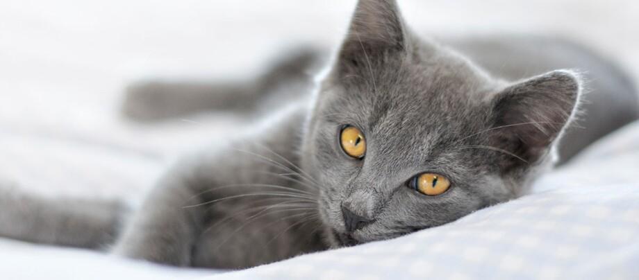Eine Katze liegt auf einem Bett.