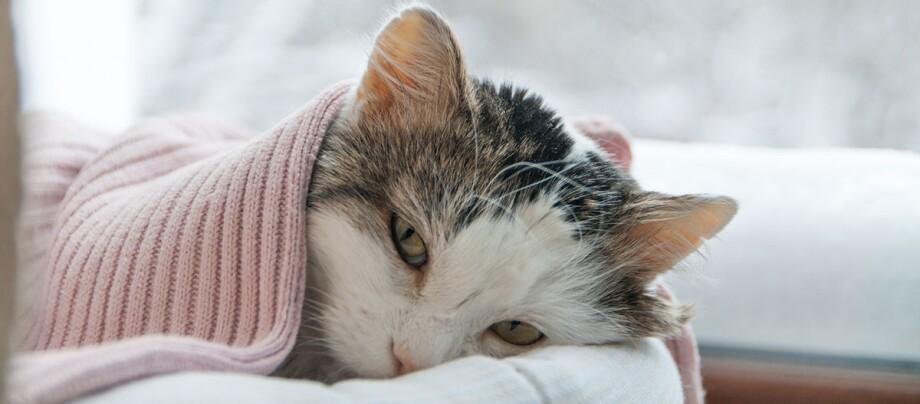 Eine Katze liegt krank im Arm der Besitzerin.