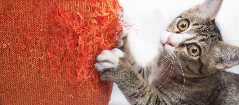 Eine Katze zerkratzt ein Möbel.