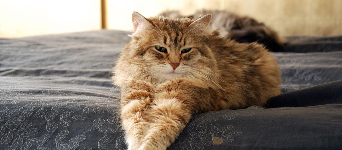 Eine Katze streckt sich auf dem Bett aus.