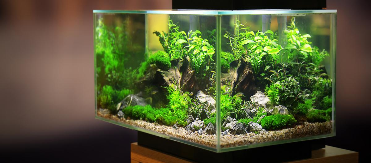 Ein Aquarium voller Pflanzen.