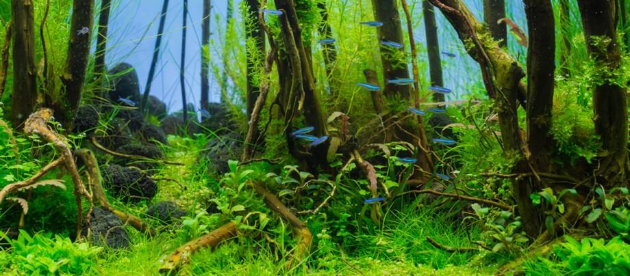 Ein Aquarium mit viel Grün.