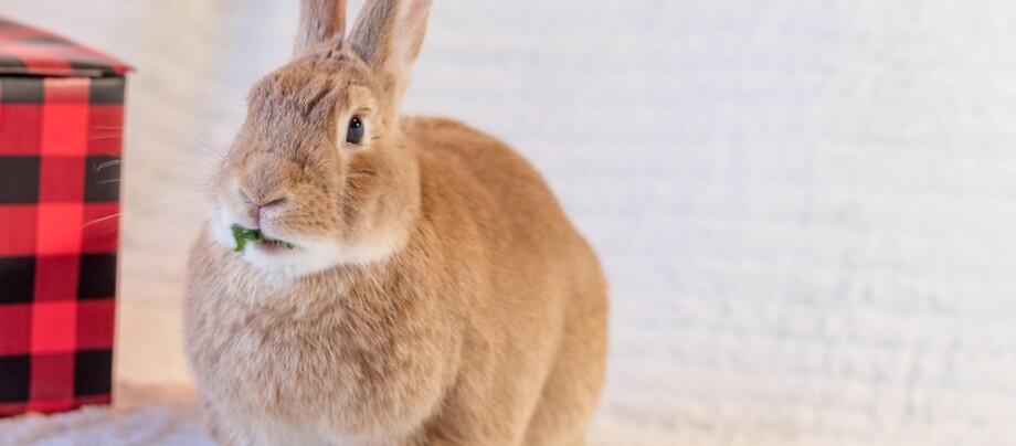 Ein Kaninchen frisst etwas.