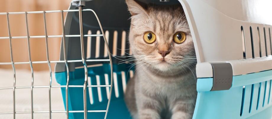 Eine Katze sitzt in einer Transportbox.