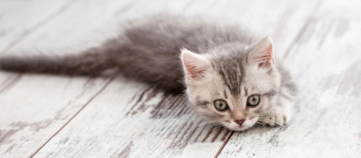 Ein Kitten liegt auf dem Boden.