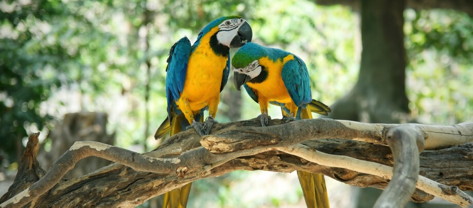 Zwei Papageien sitzen auf einem Ast.