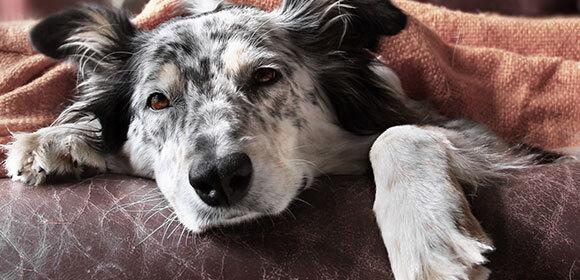 Hund Durchfall