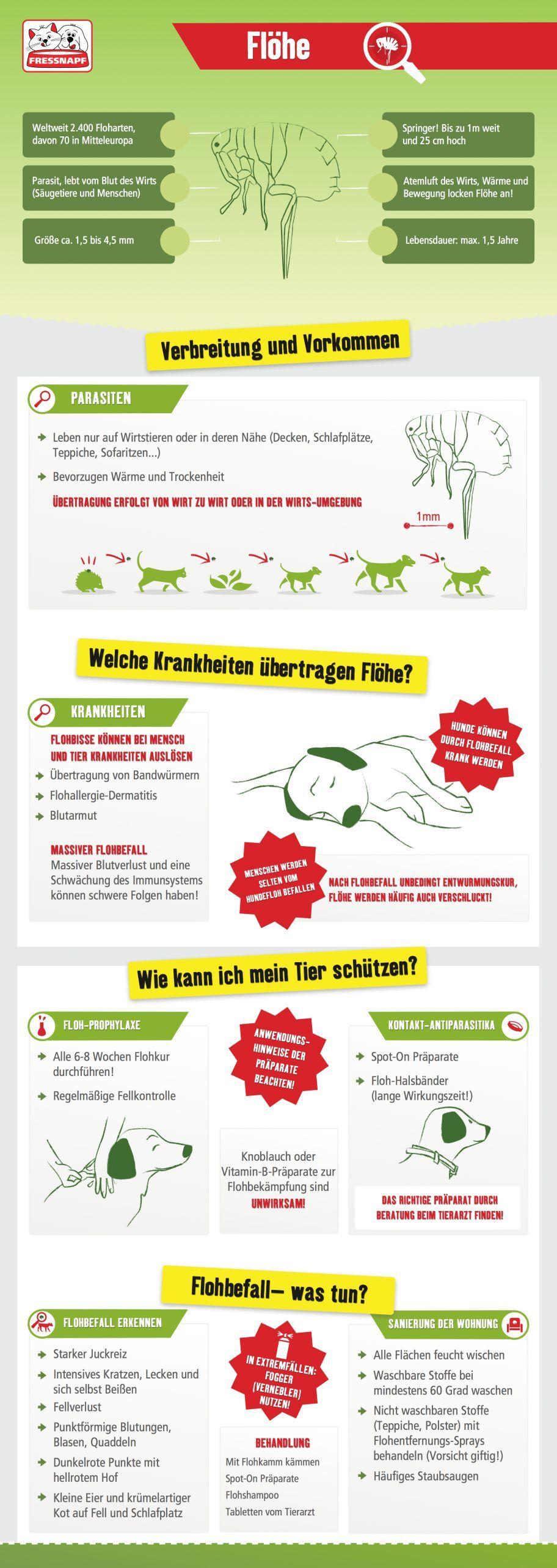 Infografik Floehe