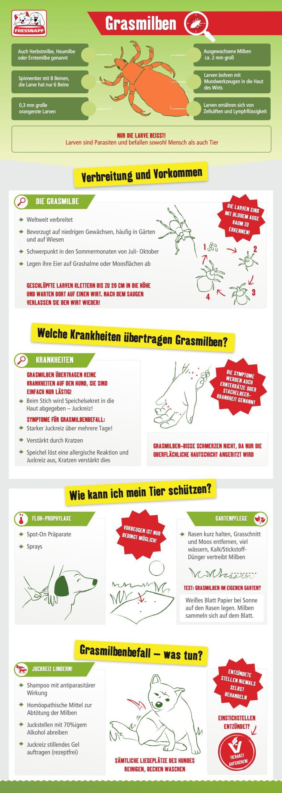 Infografik Grasmilben