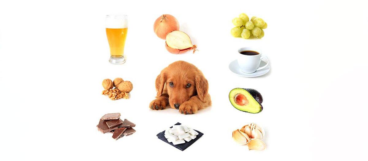 Übersicht von giftigen Lebensmitteln für Hunde.