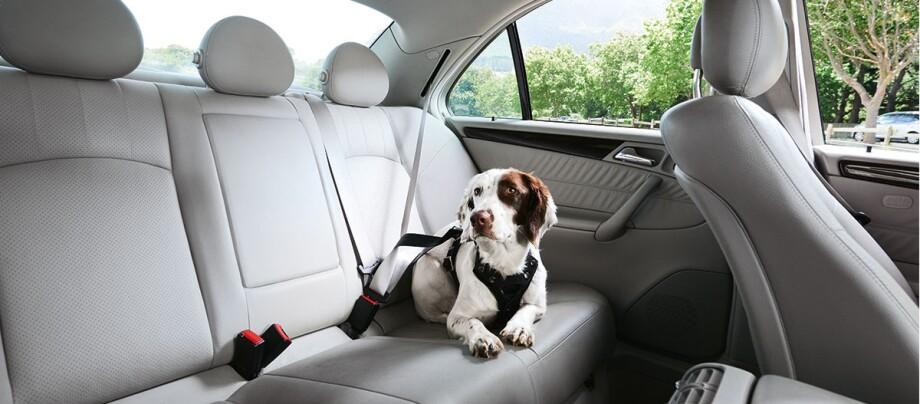 Ein Hund sitzt auf dem Rücksitzt.