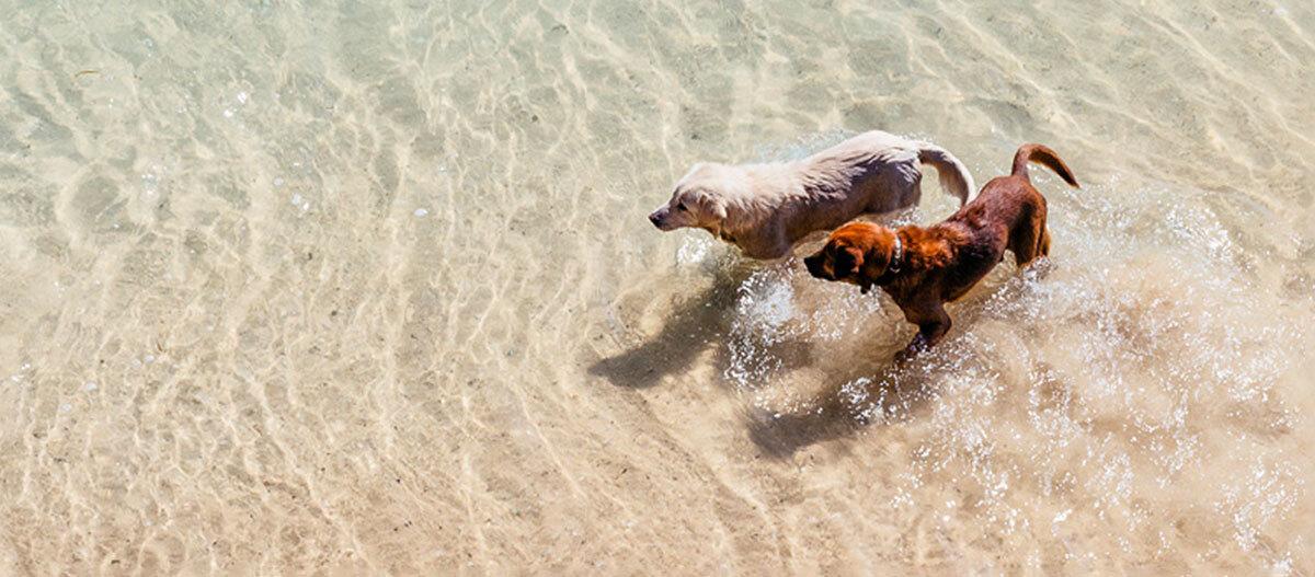 Eine Aufnahme zweier Hunde aus der Vogelperspektive.
