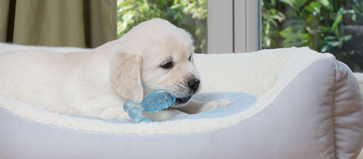 Ein Puppy liegt in seinem Welpenbett.