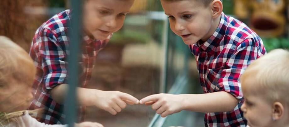 Kinder stehen vor einem Aquarium.
