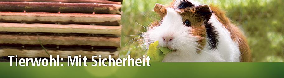 Tierwohl Zertifizierung