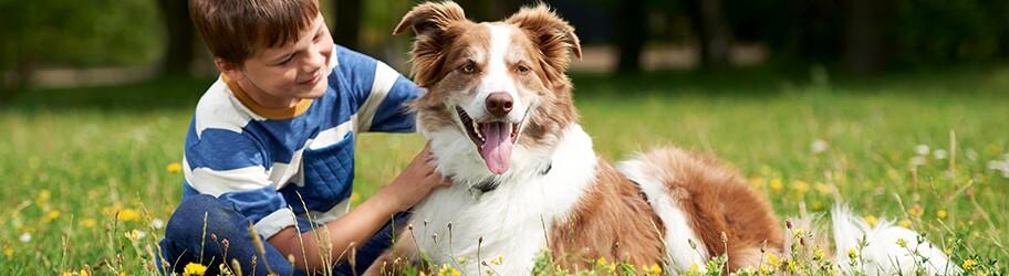 Junge mit Hund - Verantwortung
