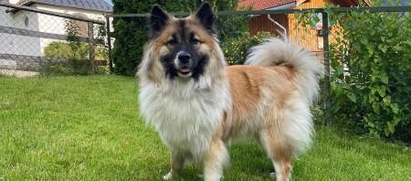 Elo Hund steht im Garten