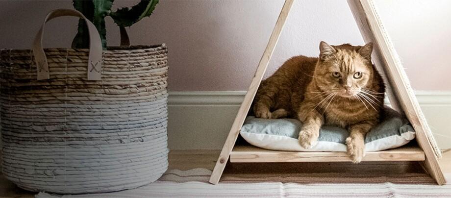 Eine Katze sind im selbstgemachten Katzenhaus.