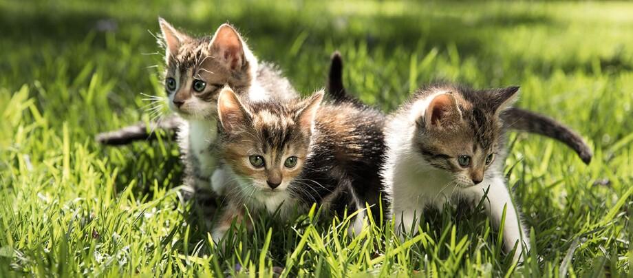 Drei Kitten sitzen auf einer Wiese.