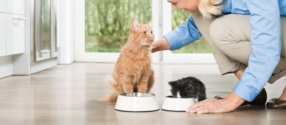 Eine Katze und ein Kitten beim fressen.