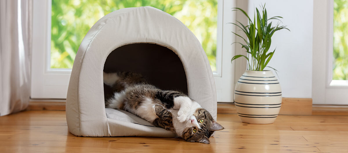 Eine Katze liegt in ihrer Katzenhöhle.