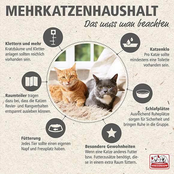 Infografik zum Thema Katzen zusammenführen
