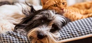 Tierisch engagiert Ehrenamt streicheln und kuscheln
