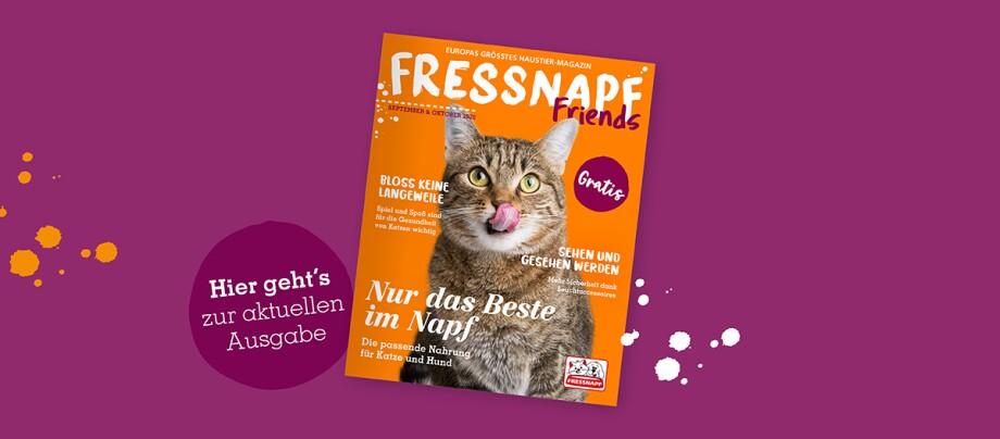 Online_Teaser_Magazin_05/29
