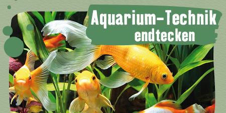 Aquarium-Technik entdecken
