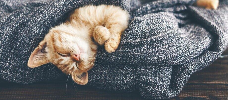 Katze Kuscheln im Winter Ratgeber