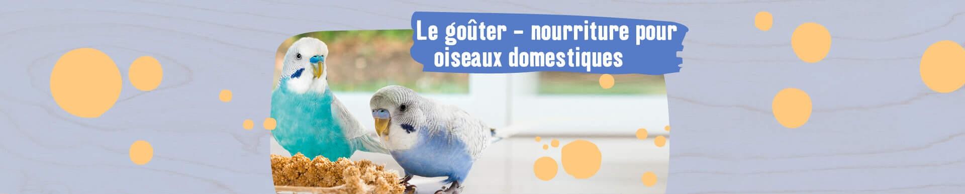 Nourriture pour oiseaux domestiques