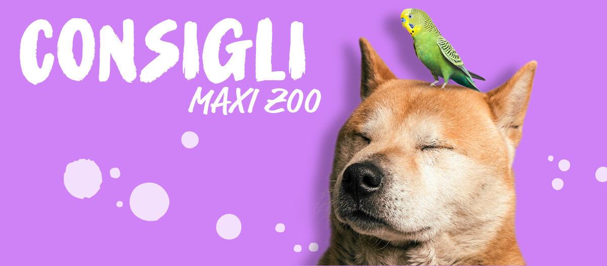 Consigli, il magazine di Maxi Zoo