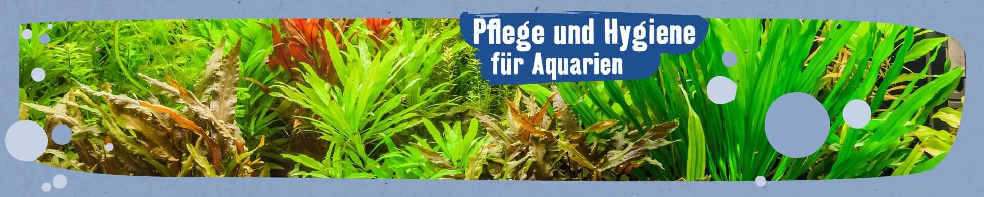 Pflege und Hygiene für Aquarien