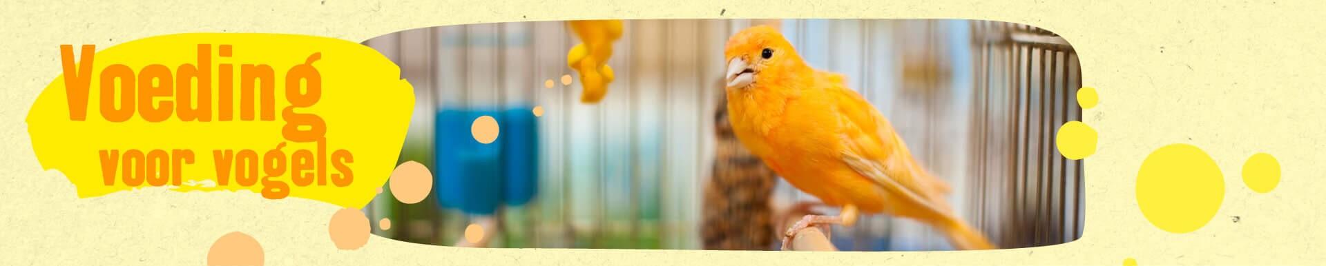 Voeding voor vogels