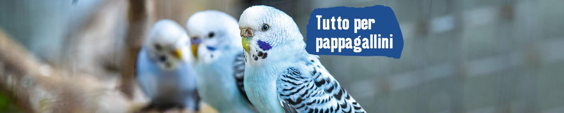 Tutto per pappagallini