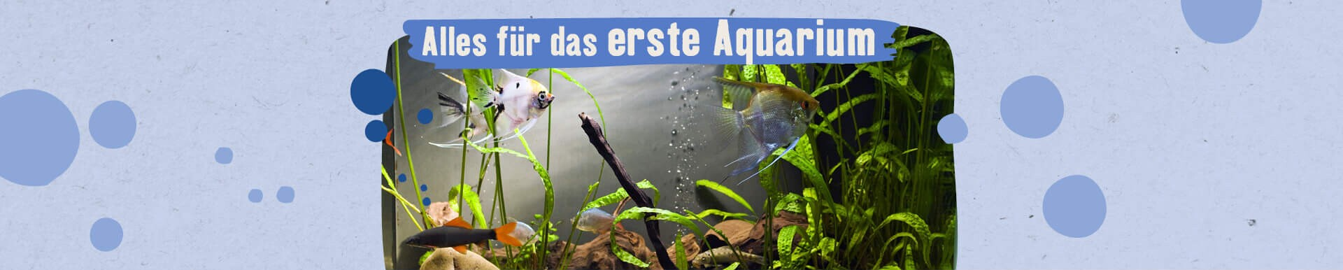 Alles für das erste Aquarium