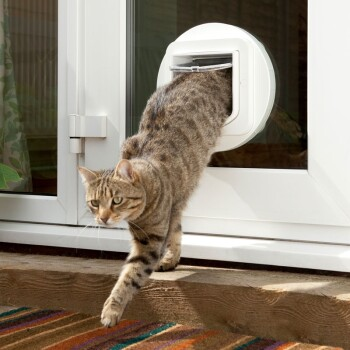 Lifestyle-with-microchip-cat-flap-3.jpg