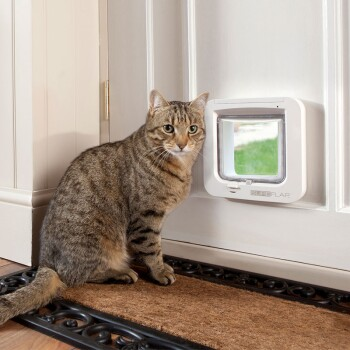 Lifestyle-with-microchip-cat-flap-1.jpg