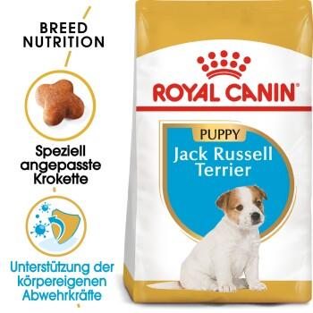 Jack Russel Terrier Junior 1,5kg