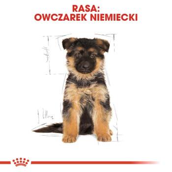 German Shepherd Puppy 12kg