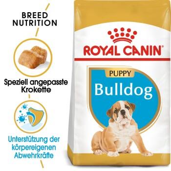 Bulldog Puppy 3kg