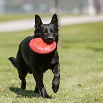 Frisbee rot L