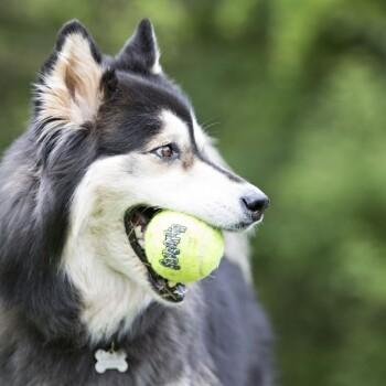Piłki tenisowe Squeakair M